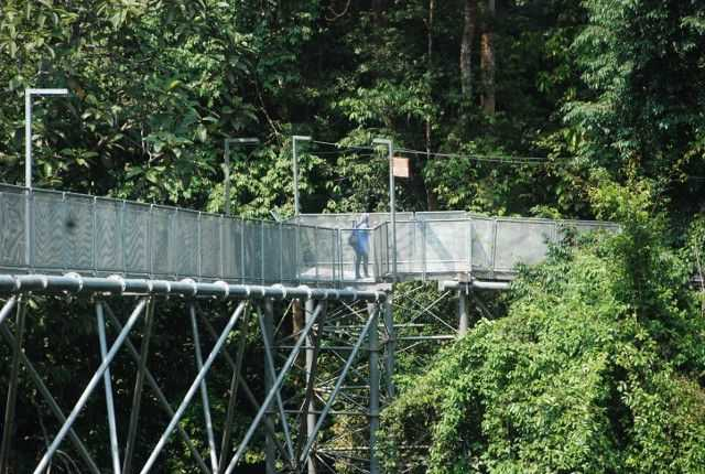 Pemandangan Tree Top Walk Sungai Sedim.